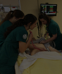Students Checking Pulse on Dummy