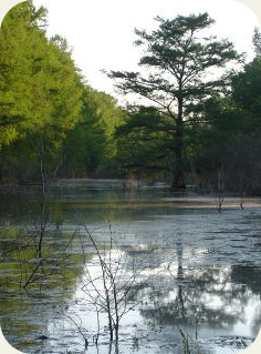 single tree in the swamp